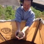 【2013年 福井そば畑レポート】乾燥前のソバの収穫を見学し、生産者のそば作りへのこだわりや今年の出来をお聞きしました。