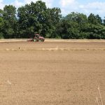 福井在来種の播種直後に起こる湿害を防ぐ対策として、小畦(こうね)立て技術を用いた秋そば播種が始まりました。