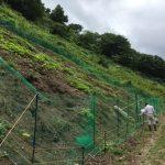 「焼畑そば栽培2018(前編)」福井県美山町で行った焼畑そばの播種作業。